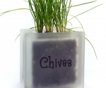 Windowsill herb pot glass block with Chives