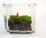 Glass block mini moss terrarium
