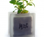 Windowsill herb pot glass block with Mint