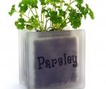 Windowsill herb pot glass block with Parsley