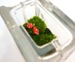 glass block moss terrarium with red toadstools