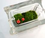 Mini moss terrarium glass block red mushrooms