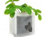 glass block strawberry plant pot