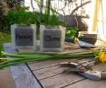 Glass block parsley and chives herb pots