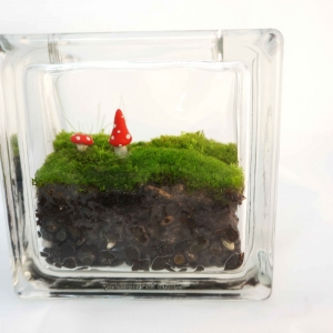 Glass block mini moss terrarium