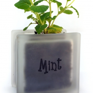 Windowsill herb pot glass block with Mint