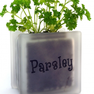 Windowsill herb pot glass block with Parsley