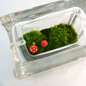 Mini moss terrarium glass block red mushrooms