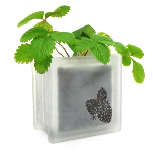 glass block strawberry plant pot