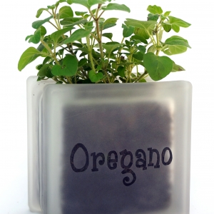 Herb pot glass block with oregano