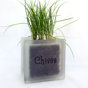 Glass block herb pot with chives