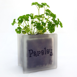 Glass block herb pot Parsley