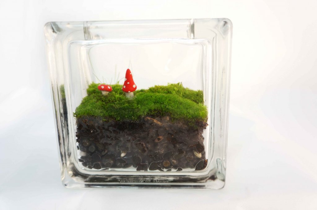 Glass block moss terrarium with red mushrooms