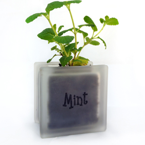 Glass block mint herb pot