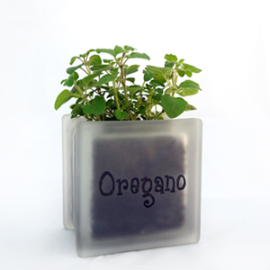Glass block herb pot with oregano